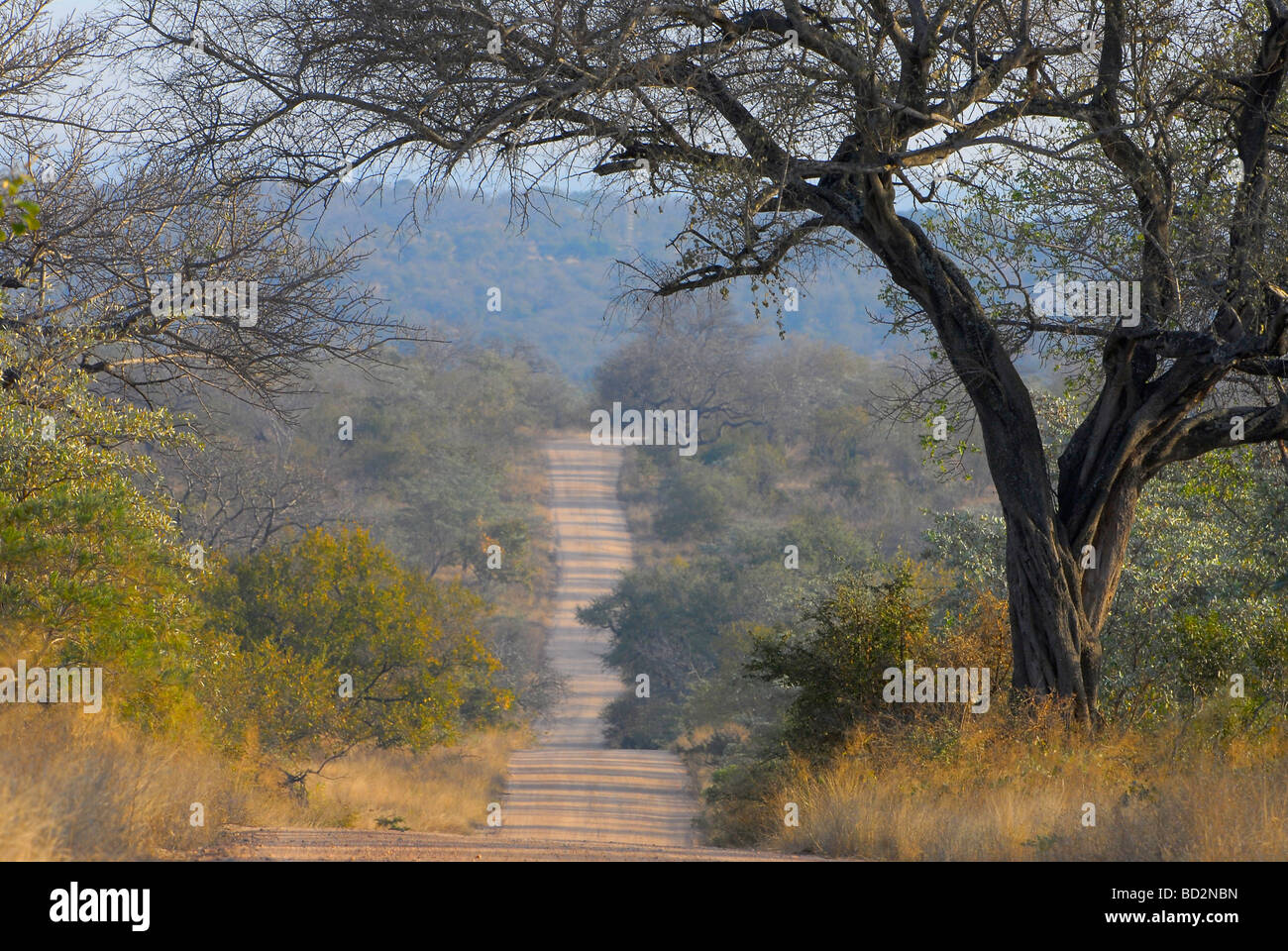 Dirt road winding through dry winter bush in Kruger National Park, South Africa - Stock Image