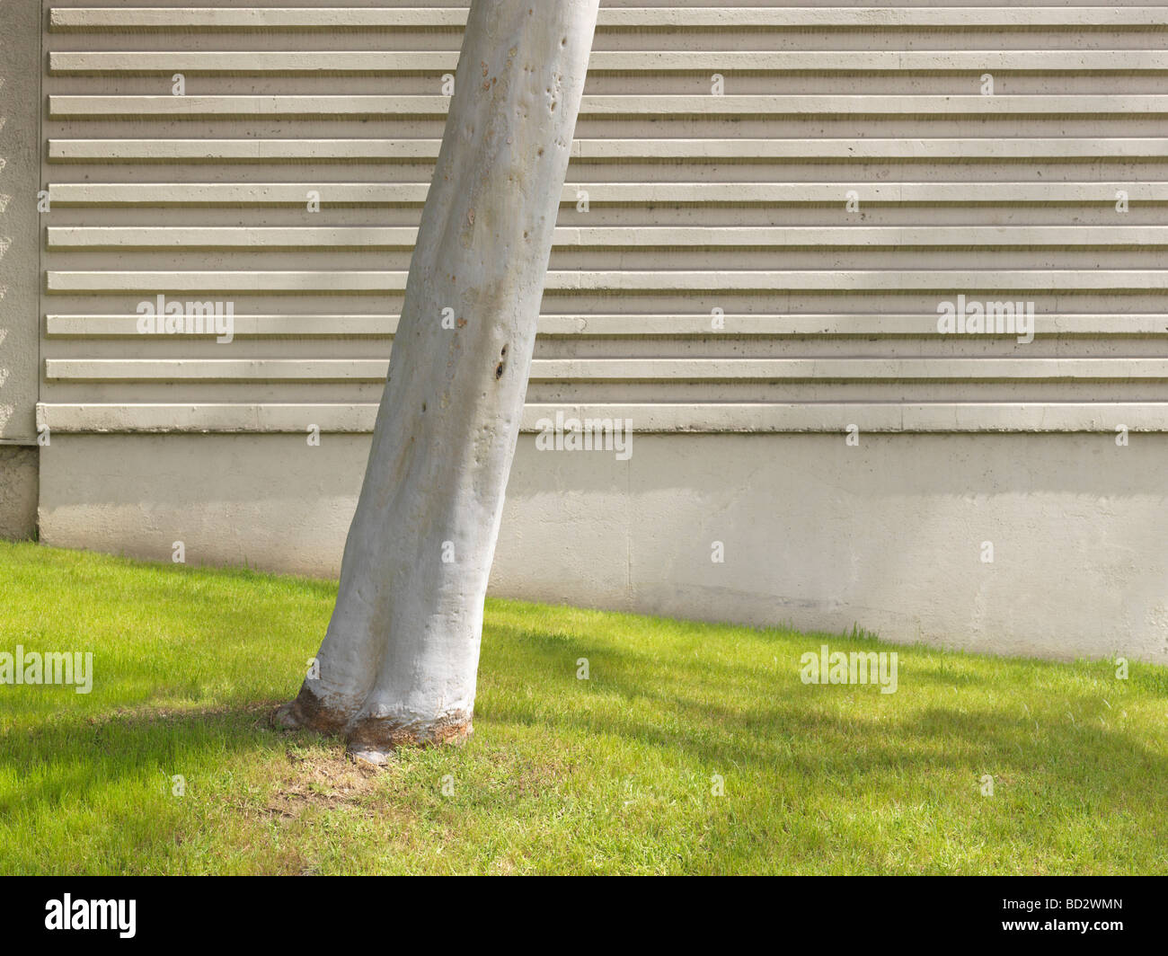 Stem on grass in front of concrete wall - Stock Image