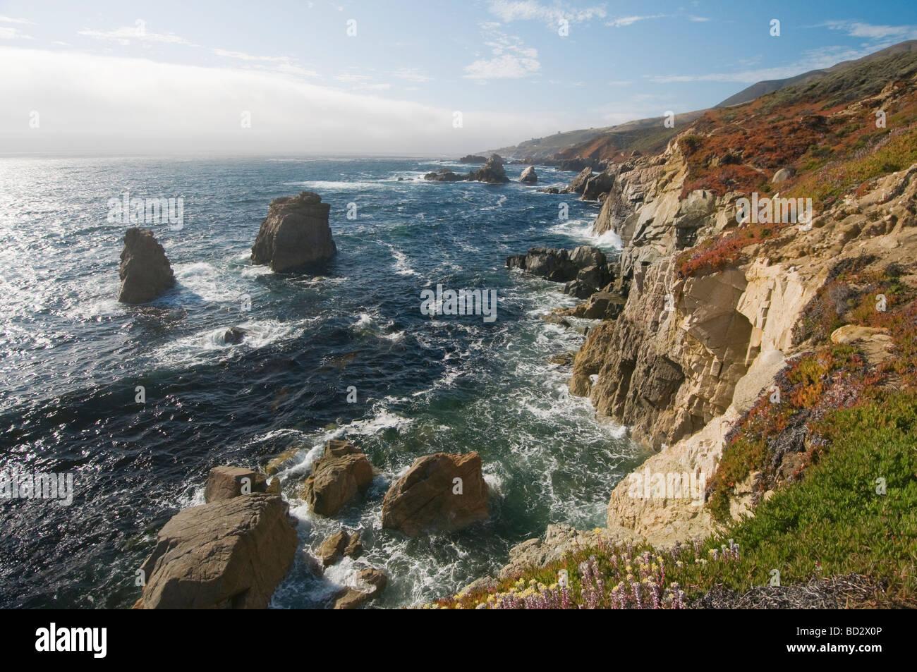 Wildflowers along the rocky coastal cliffs of Big Sur California - Stock Image