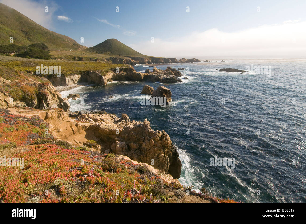 Wildflowers along the rocky cliffs on the coast of Big Sur California - Stock Image