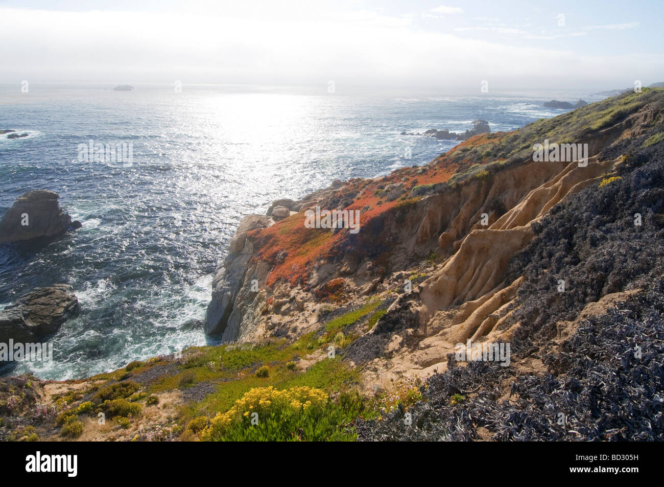 Wildflowers along the rocky coast of Big Sur California - Stock Image