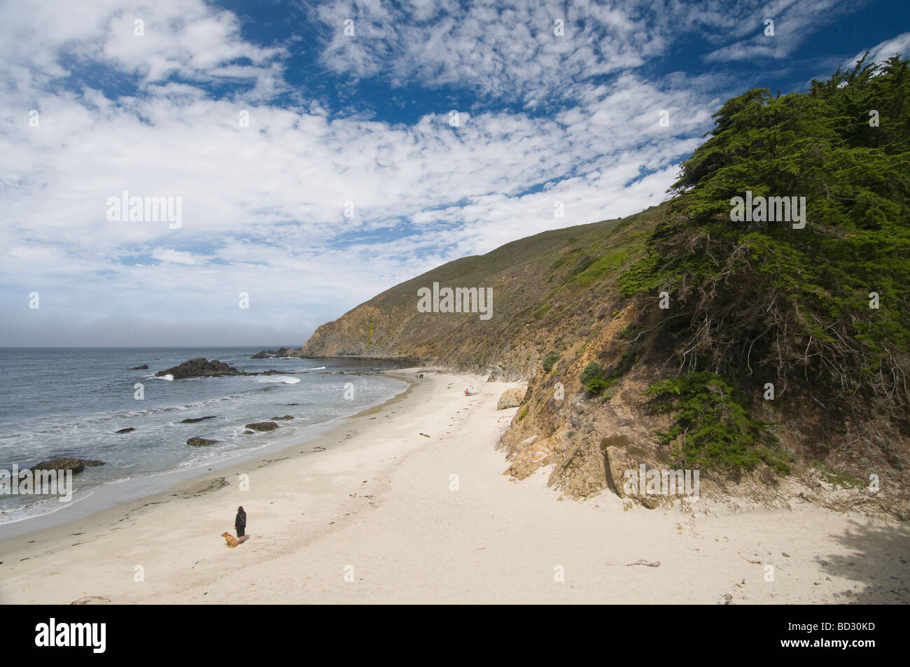 woman with dog on Pfeiffer State Beach Big Sur California - Stock Image