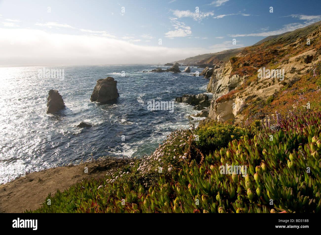 Wildflowers on Big Sur California coast - Stock Image