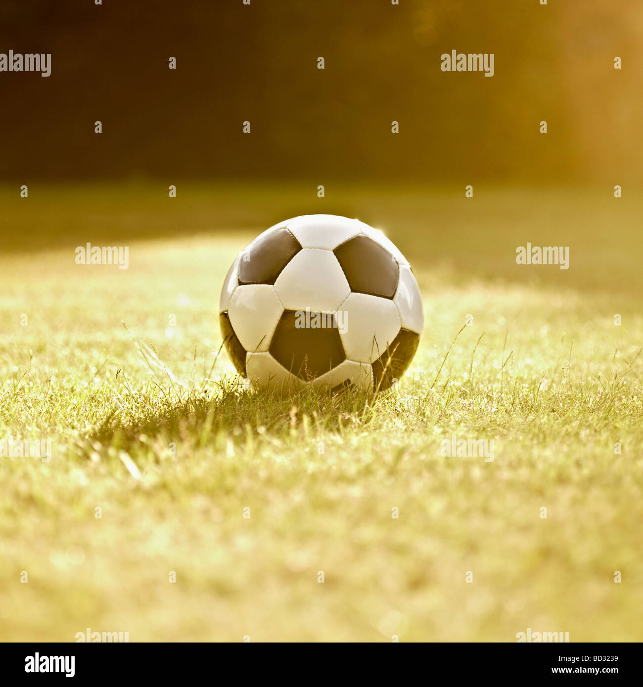 Black and white generic leather football / soccer ball on grass, back lit in the sun. - Stock Image