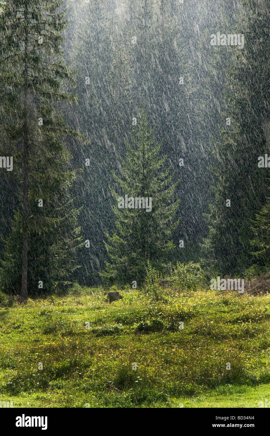 The rain in the Tarvisio forest - Stock Image