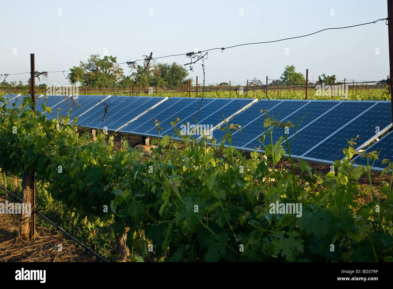 Solar Panels operating in vineyard. - Stock Image