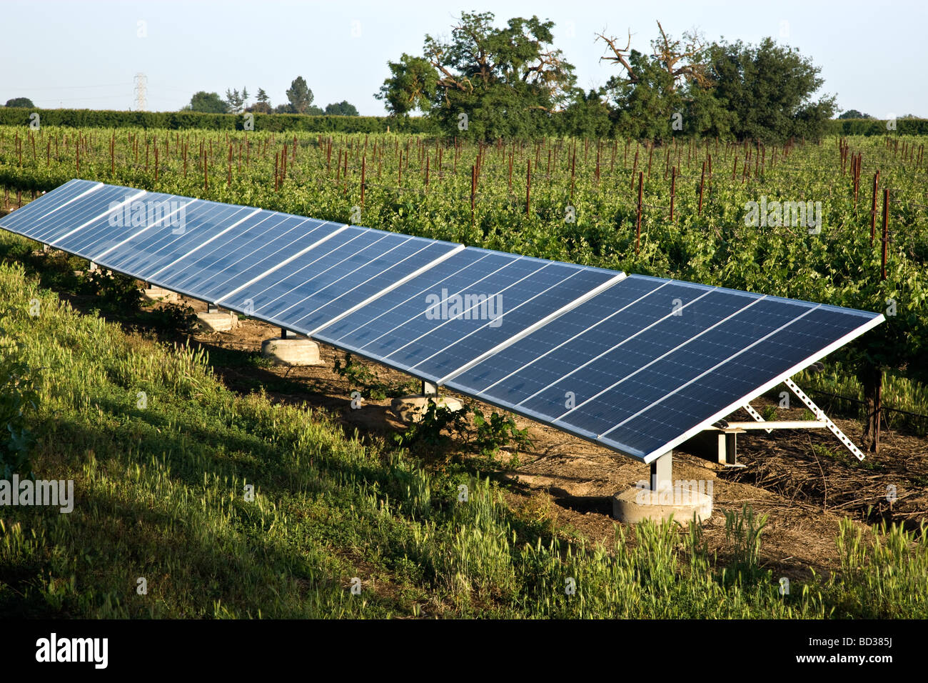 Solar Panels operating in vineyard. - Stock Image