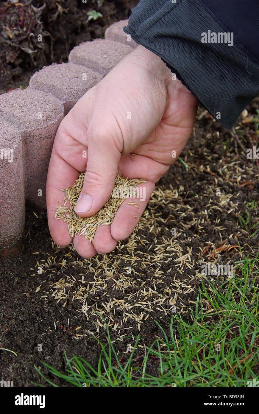 Gras Saen 01 Stock Photo 25273549 Alamy