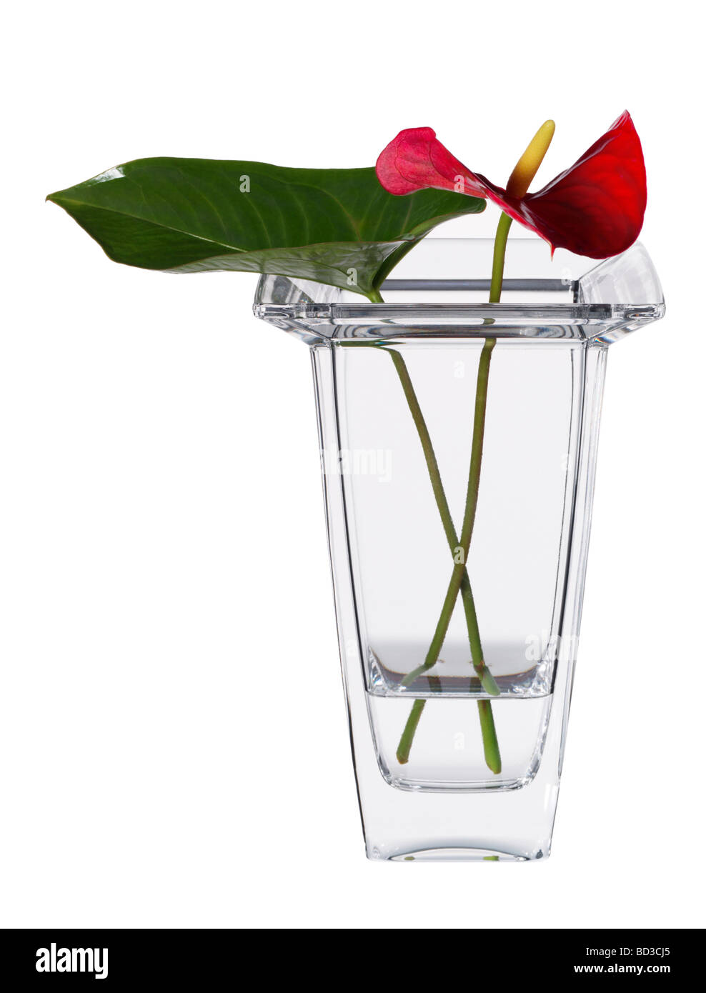 Cut flowers in a vase - Stock Image