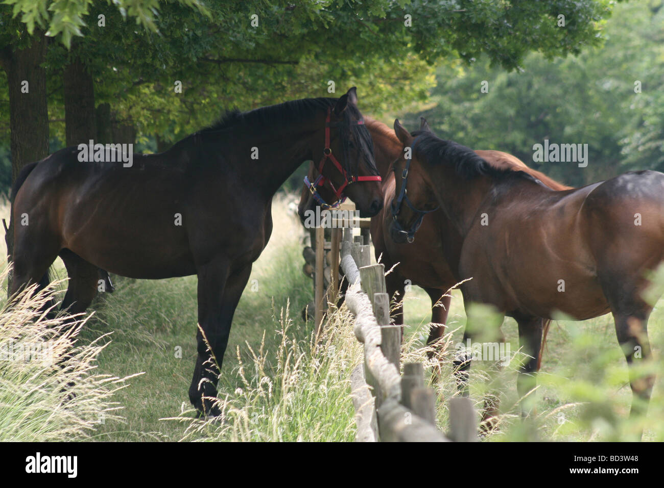 Three large brown horses discuss the winner of the big race at Mudchute Park and Farm, Isle of Dogs London. Lush - Stock Image
