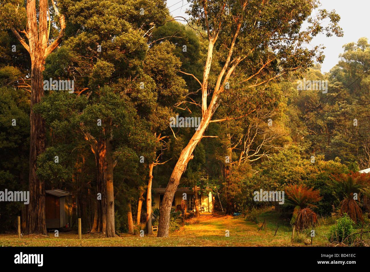 Australian country home in bushland Victoria Australia - Stock Image