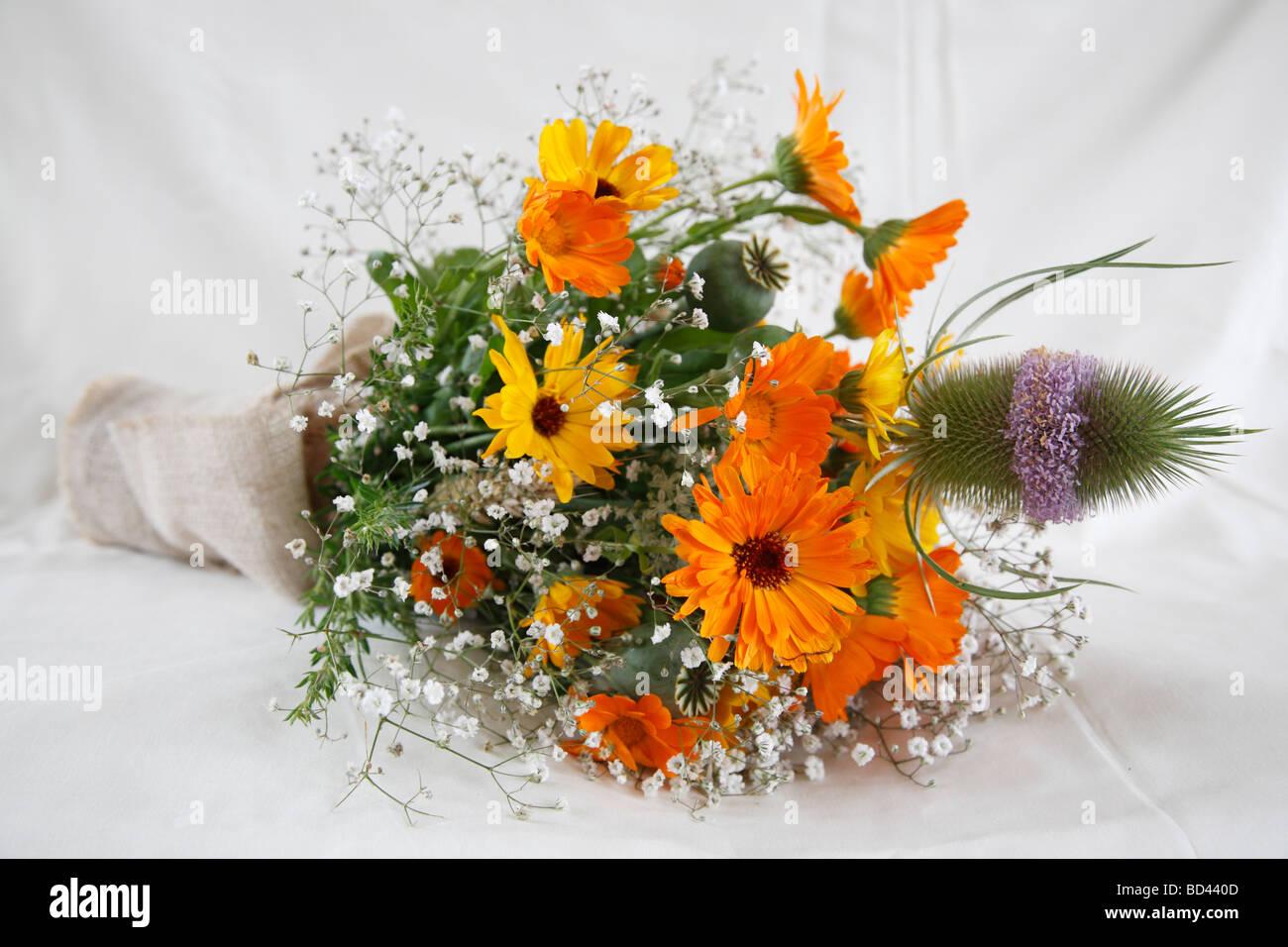 bridal bouquet; marigold (Calendula officinalis) and teasel (Dipsacus fullonum) - Stock Image