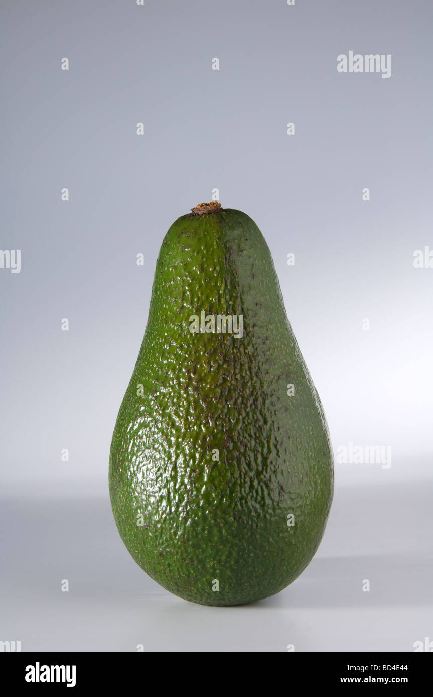 A green rough skinned Avocado pear whose name translates as testicle due to it s shape - Stock Image