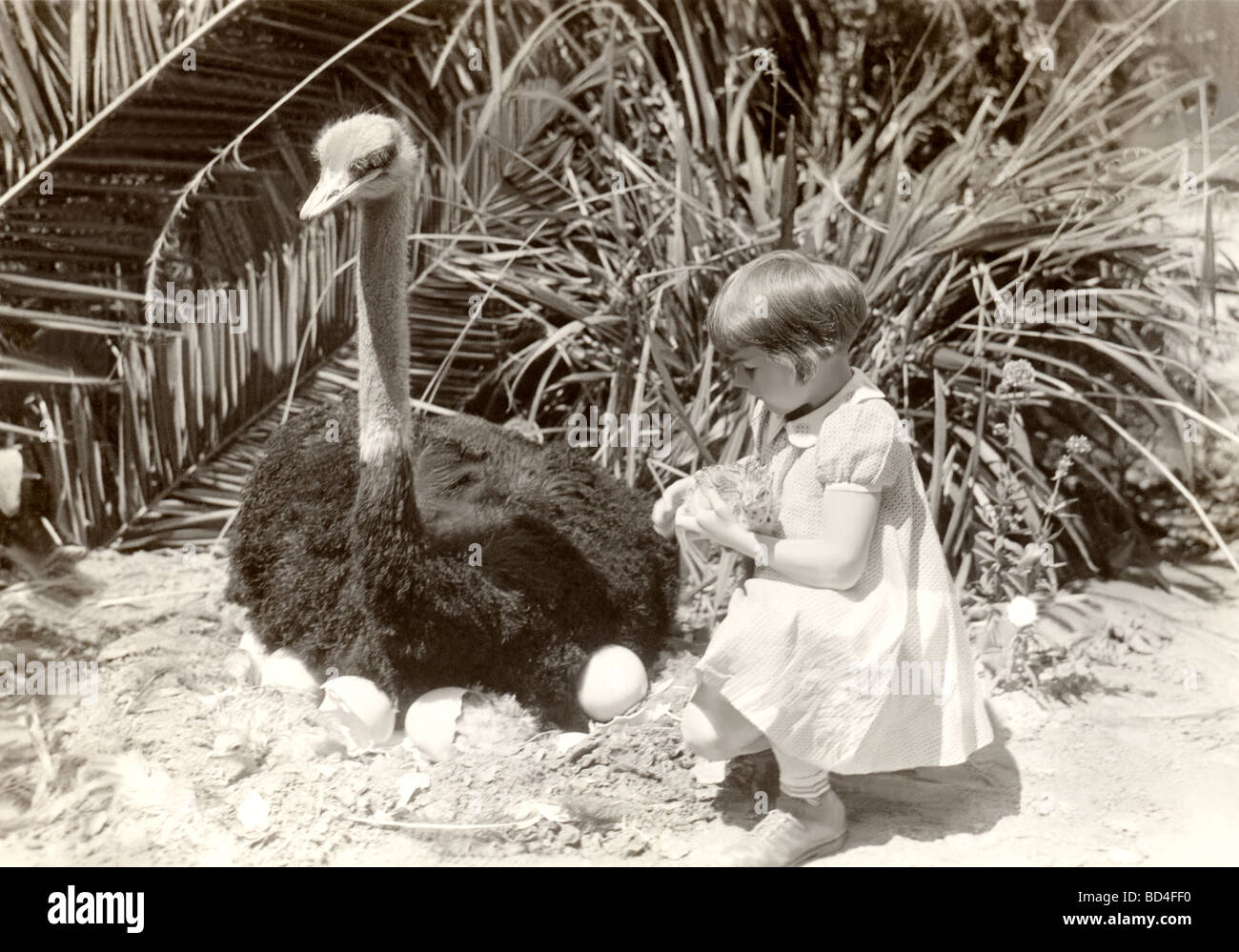 Girl & Hatching Ostrich Egg Stock Photo: 25300884 - Alamy