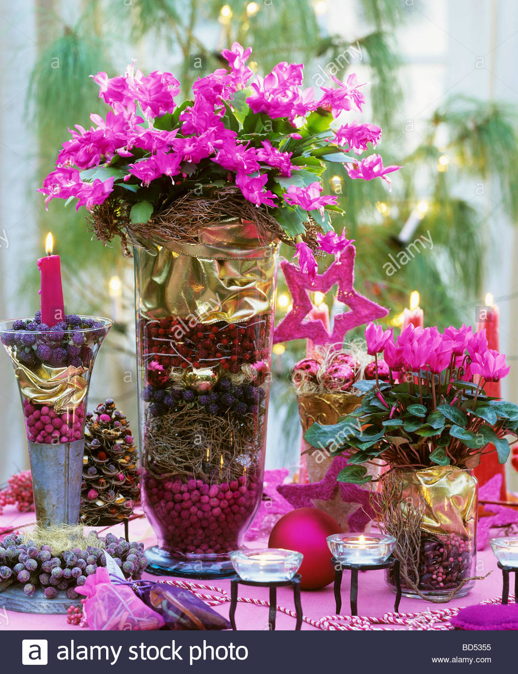 christmas cactus and cyclamen with christmas decorations stock image