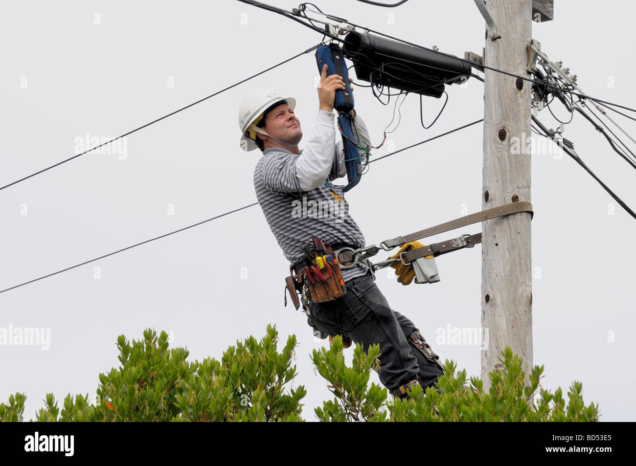 A telephone linesman makes a repair suspended in a harness on a pole