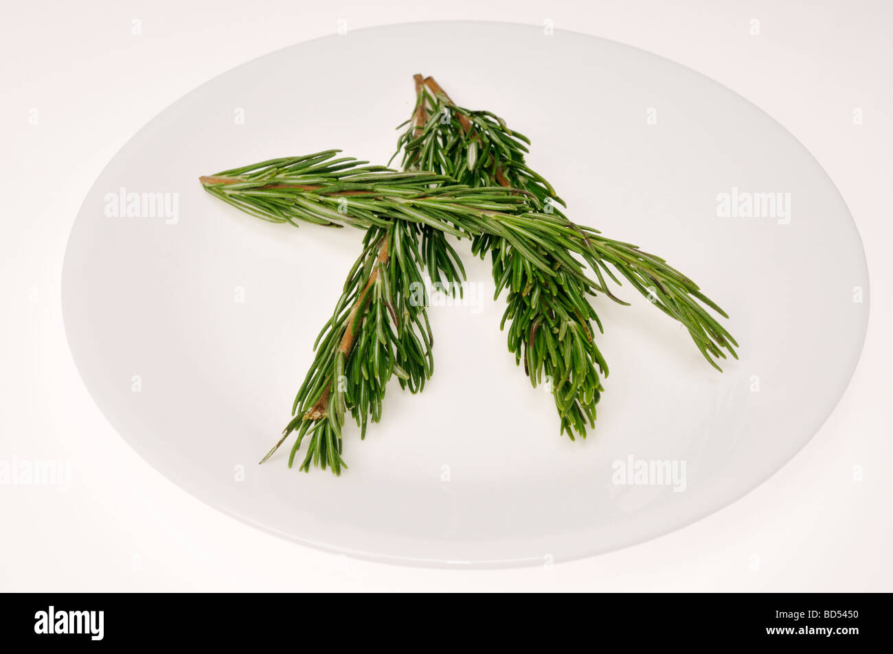 Fresh cut Rosemary sprigs on white plate - Stock Image