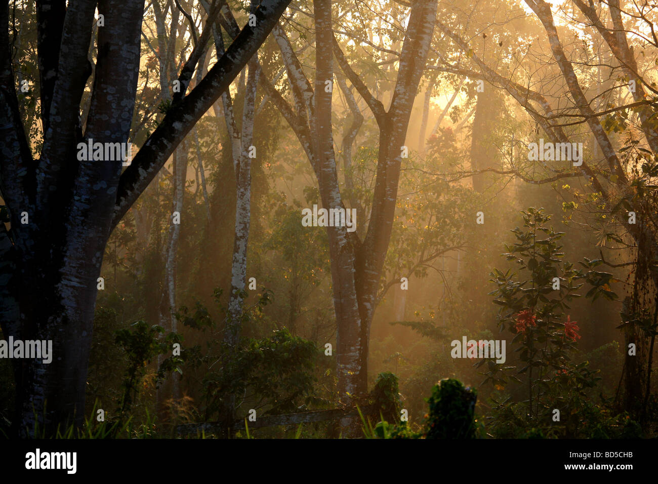Early morning mist near Cana field station in Darien national park, Republic of Panama. - Stock Image