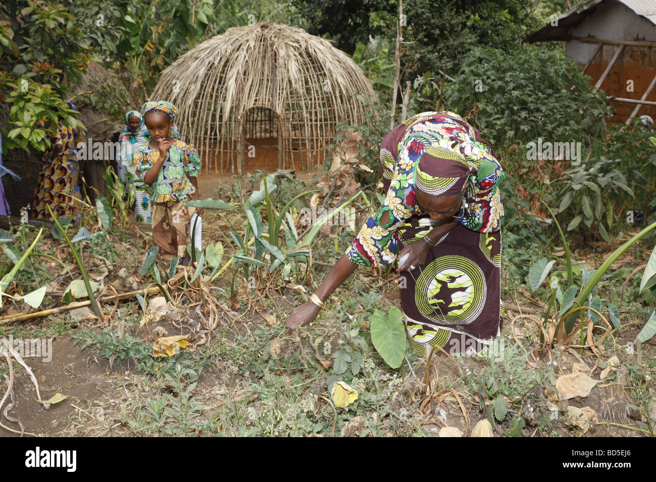 Woman and child working in the garden in front of the round hut, Mbororo ethnic group, Bamenda, Cameroon, Africa - Stock Image