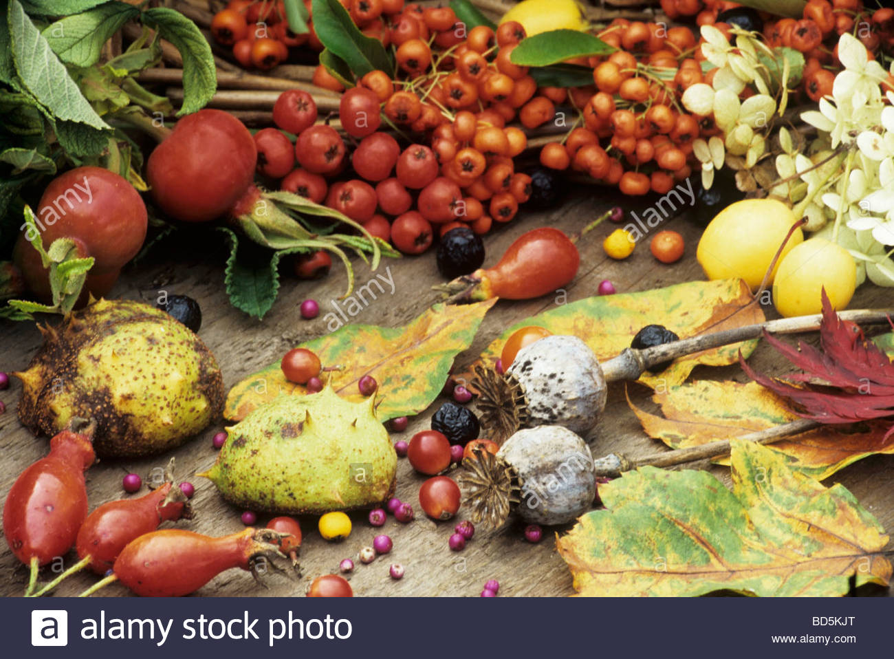 Autumn still life with berries, leaves and seed heads - Stock Image