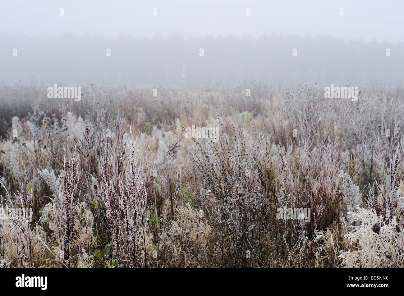 Misty landscape with vegetation covered in frost in Northern France - Stock Image