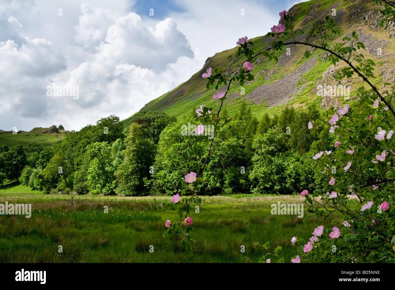 A Lakeland scene, the Lake District, Cumbria, UK. - Stock Image