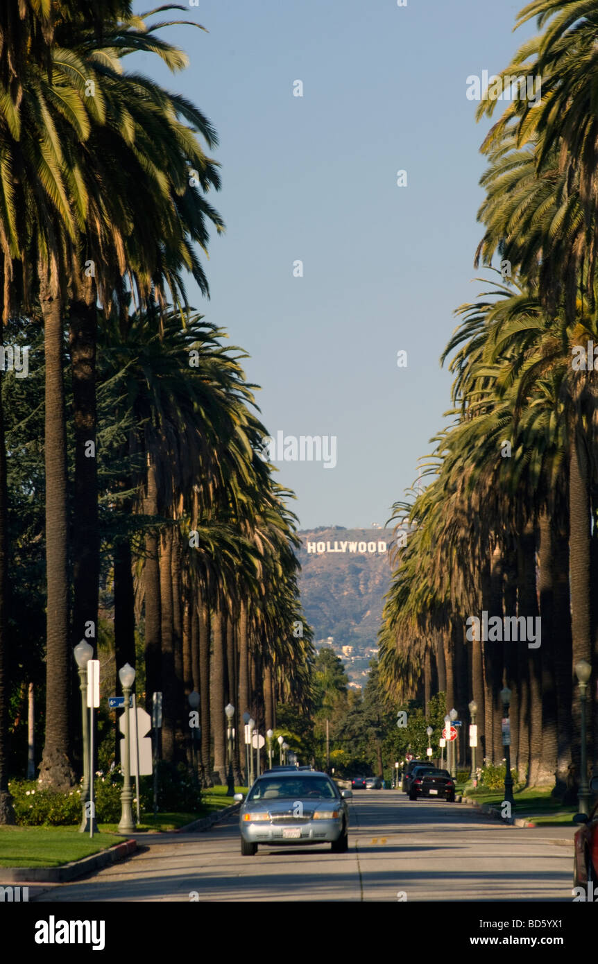 The Hollywood Sign And Palm Trees