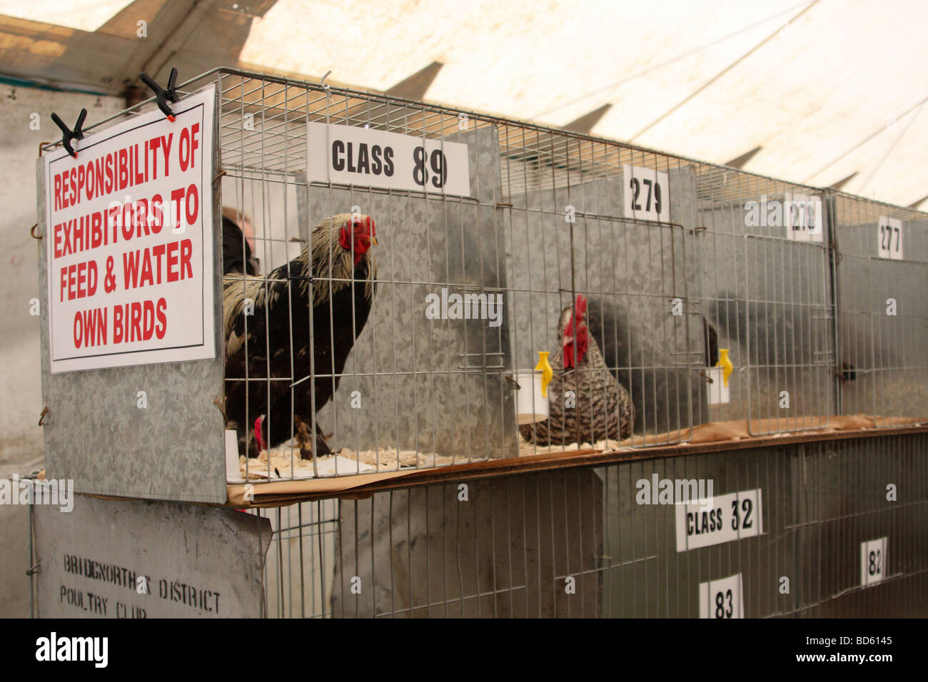 Poultry in cages at the Bakewell Show, Bakewell, Derbyshire, England, U.K. - Stock Image