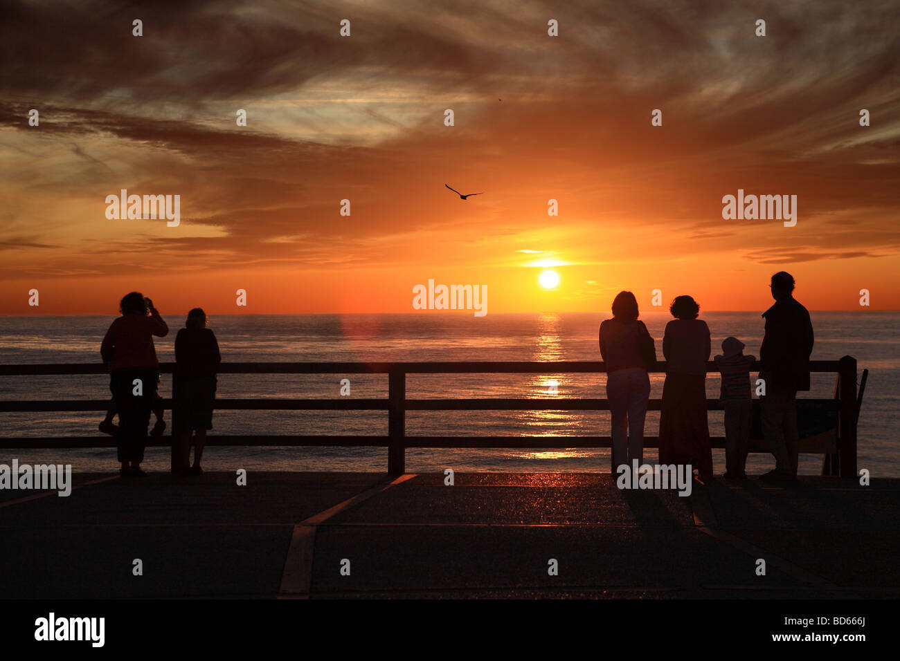 Six people watching the sunset at Etretat in Normandy while a seagull flies above, France, Europe - Stock Image