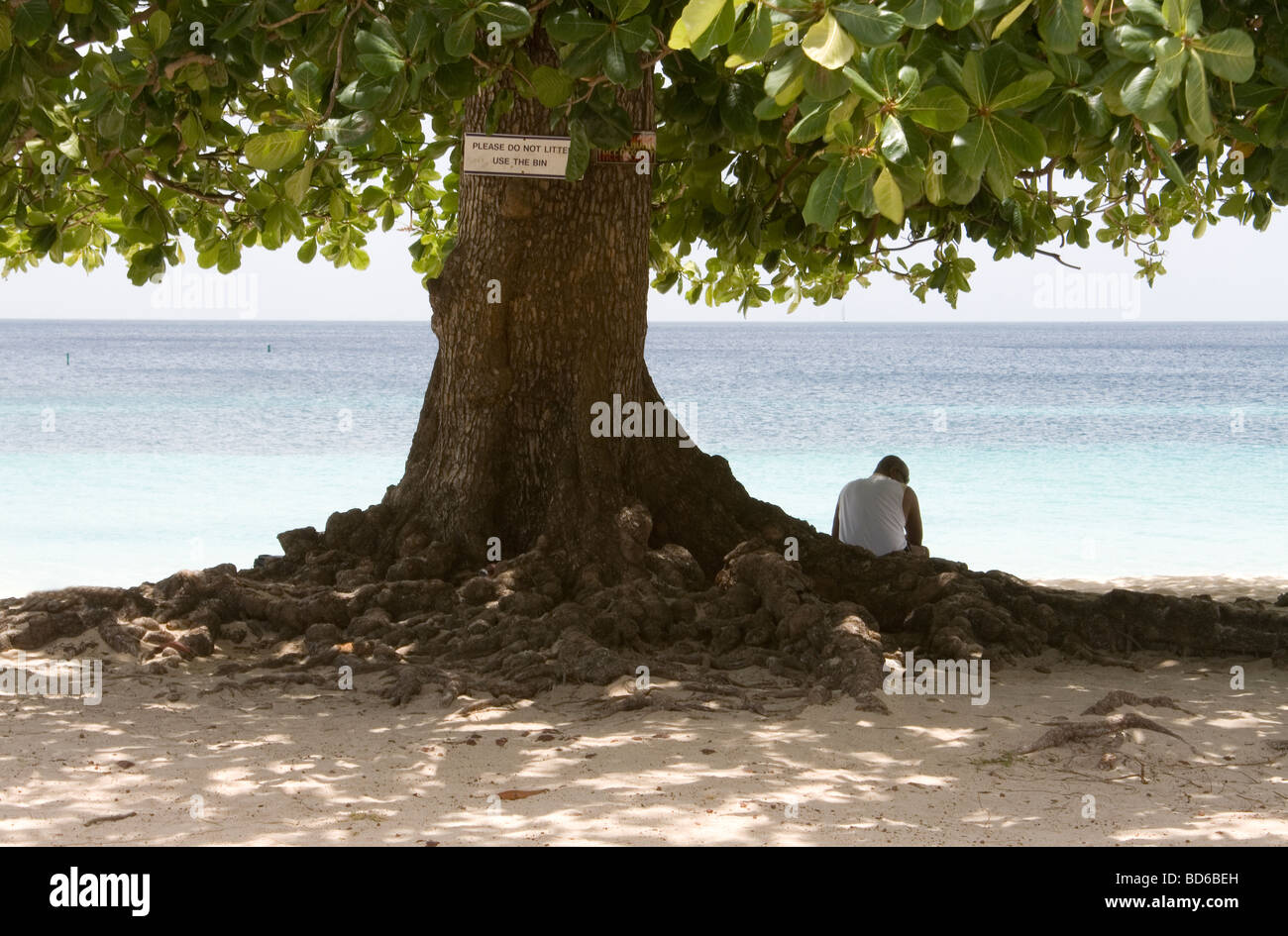 Lone Figure Chilling Out Under the Shade of a Large Tree on