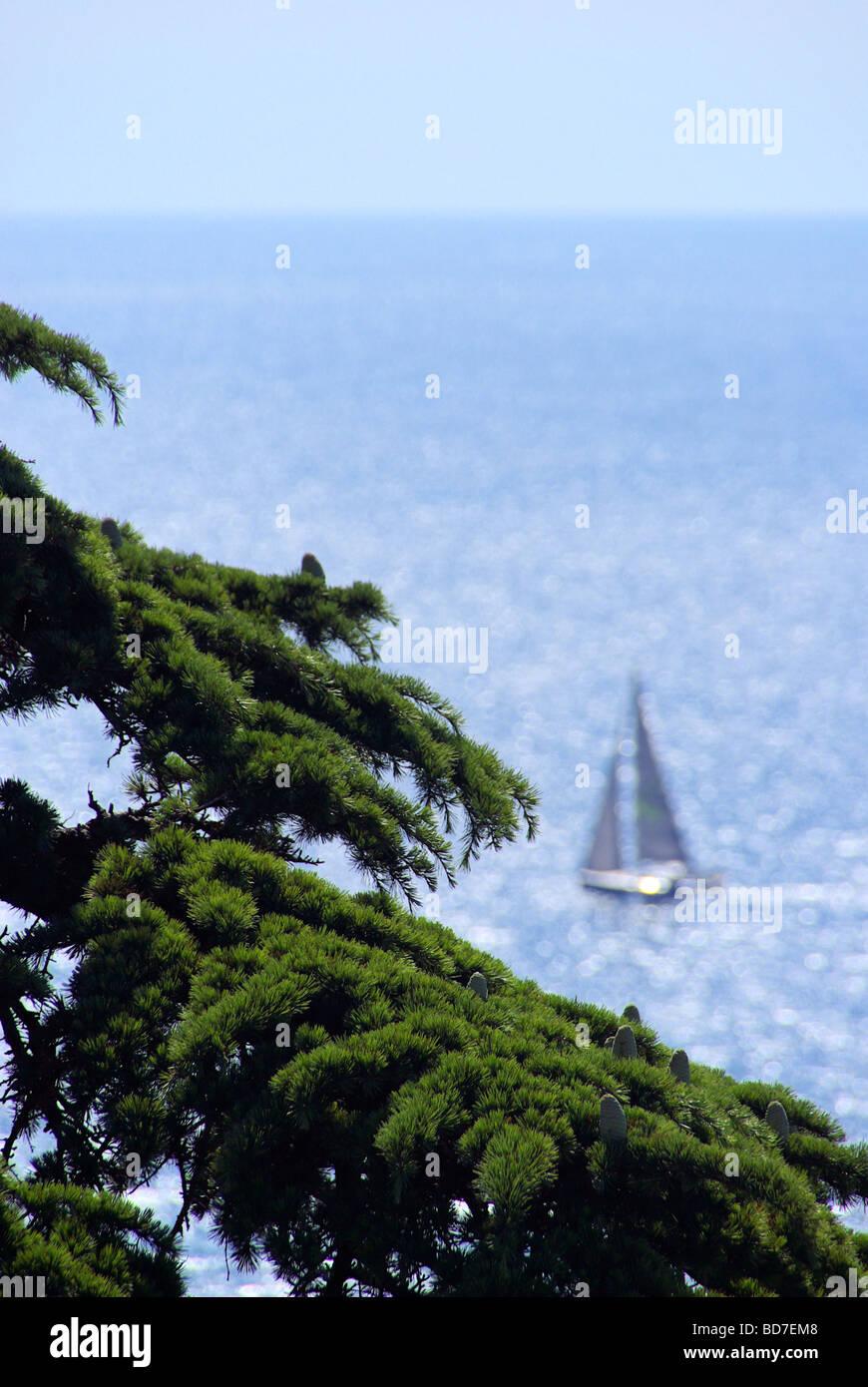 Segelboot mit Zeder cedar with sailing boat 02 - Stock Image