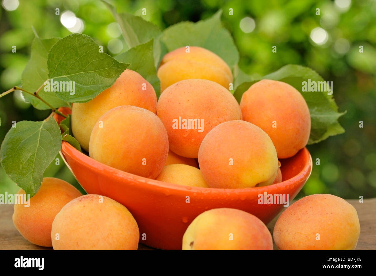 Apricots in natural background - Stock Image
