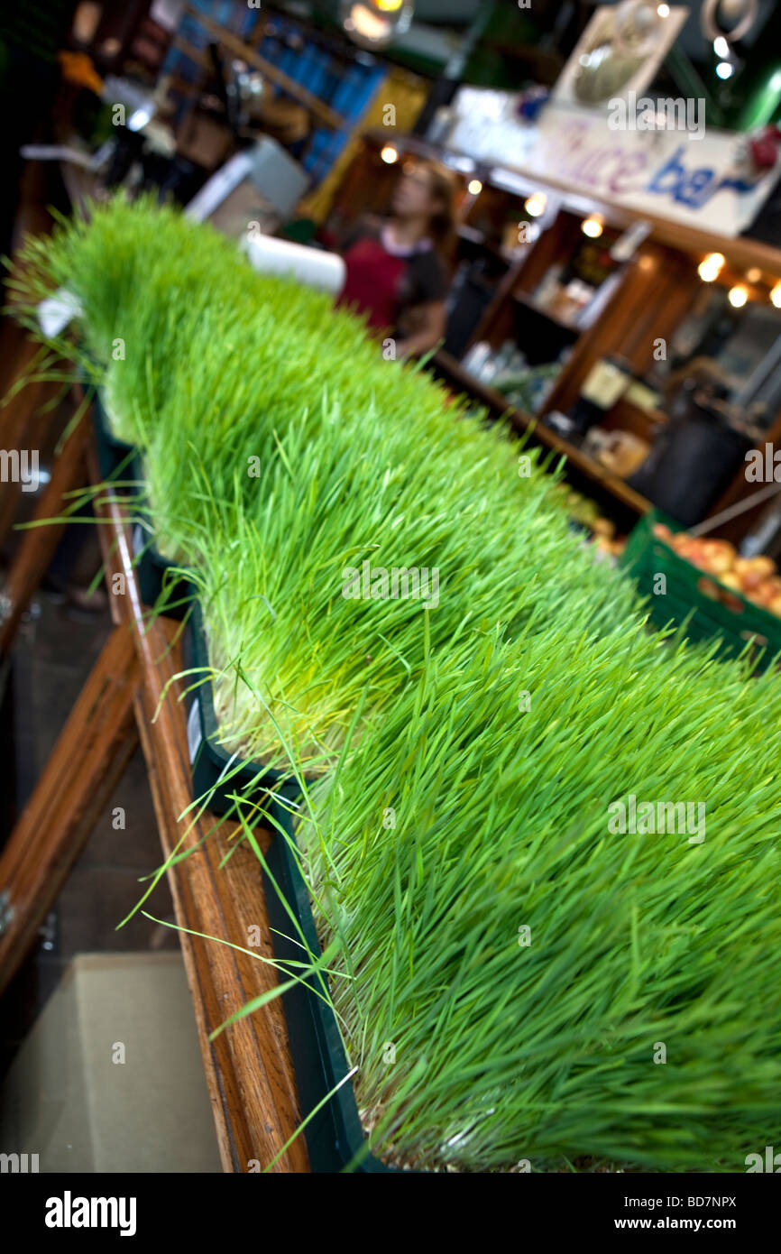 Wheatgrass being sold at s stall at Borough Market, London - Stock Image