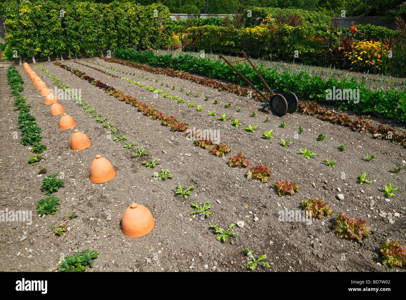 Neat vegetable garden. England, UK. - Stock Image
