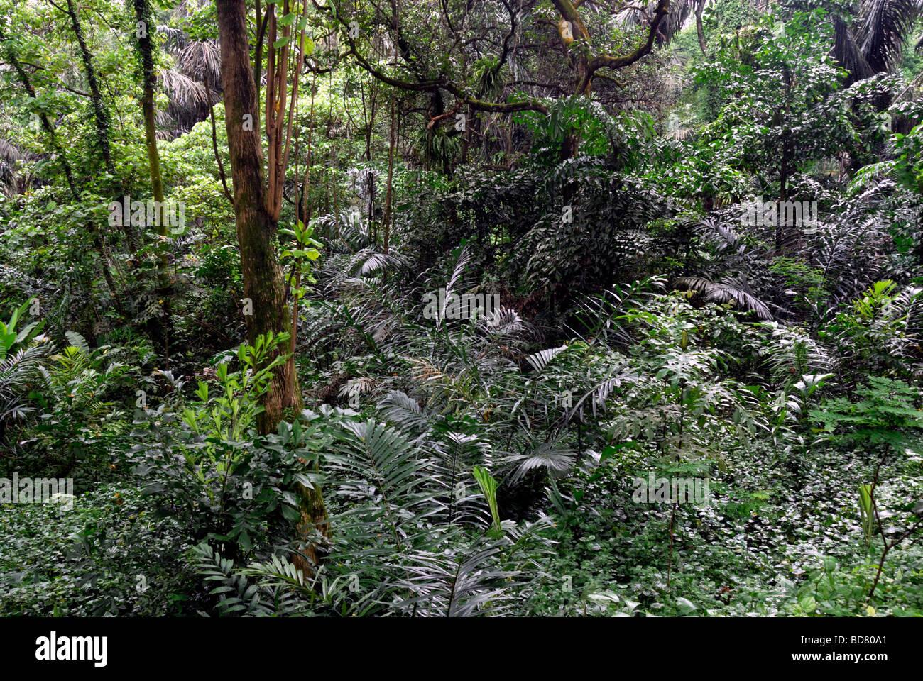 Jungle,Lake Gardens area,Kuala Lumpur - Stock Image