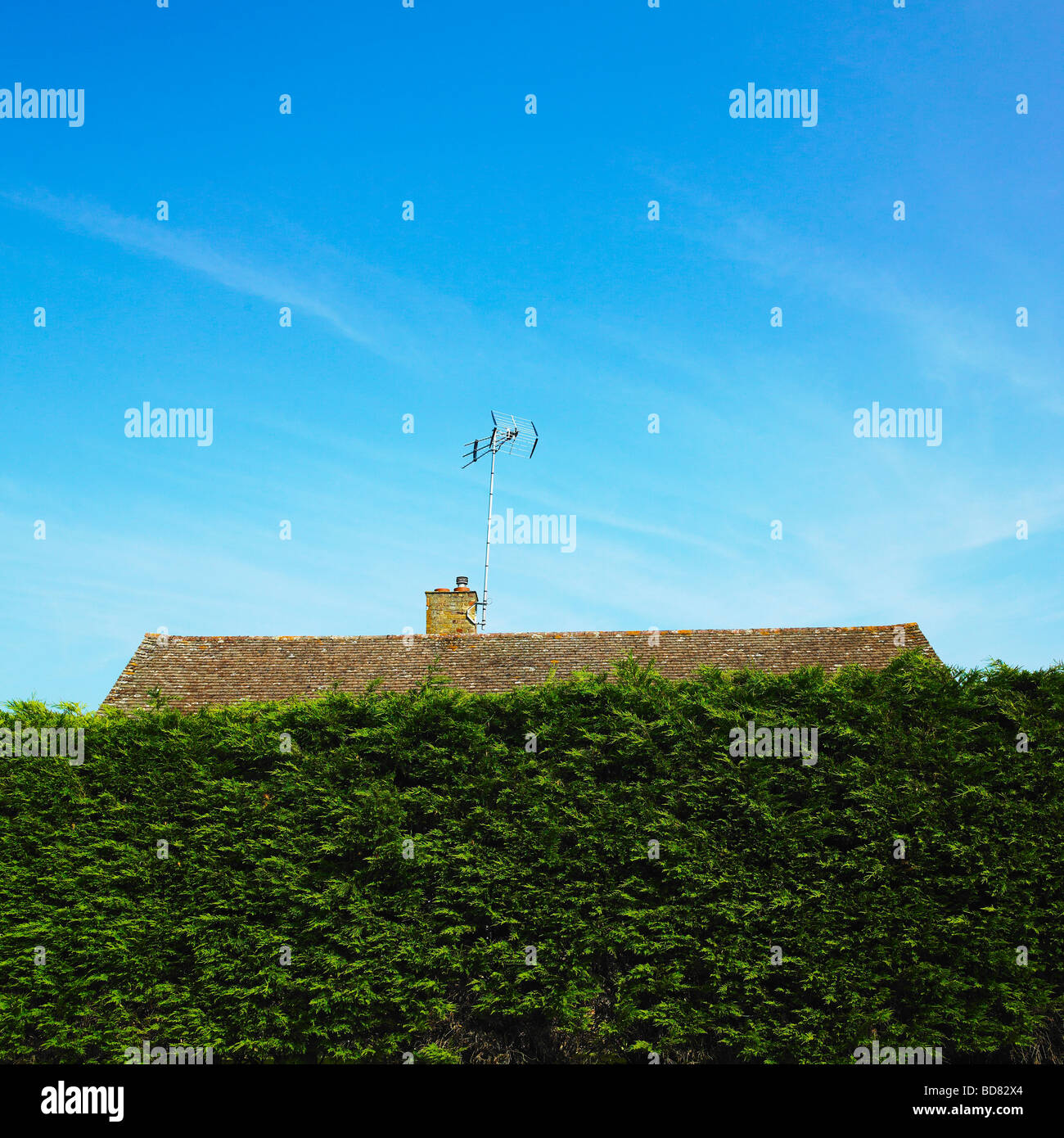 Roof top and TV aerial hidden behind a high hedge. - Stock Image