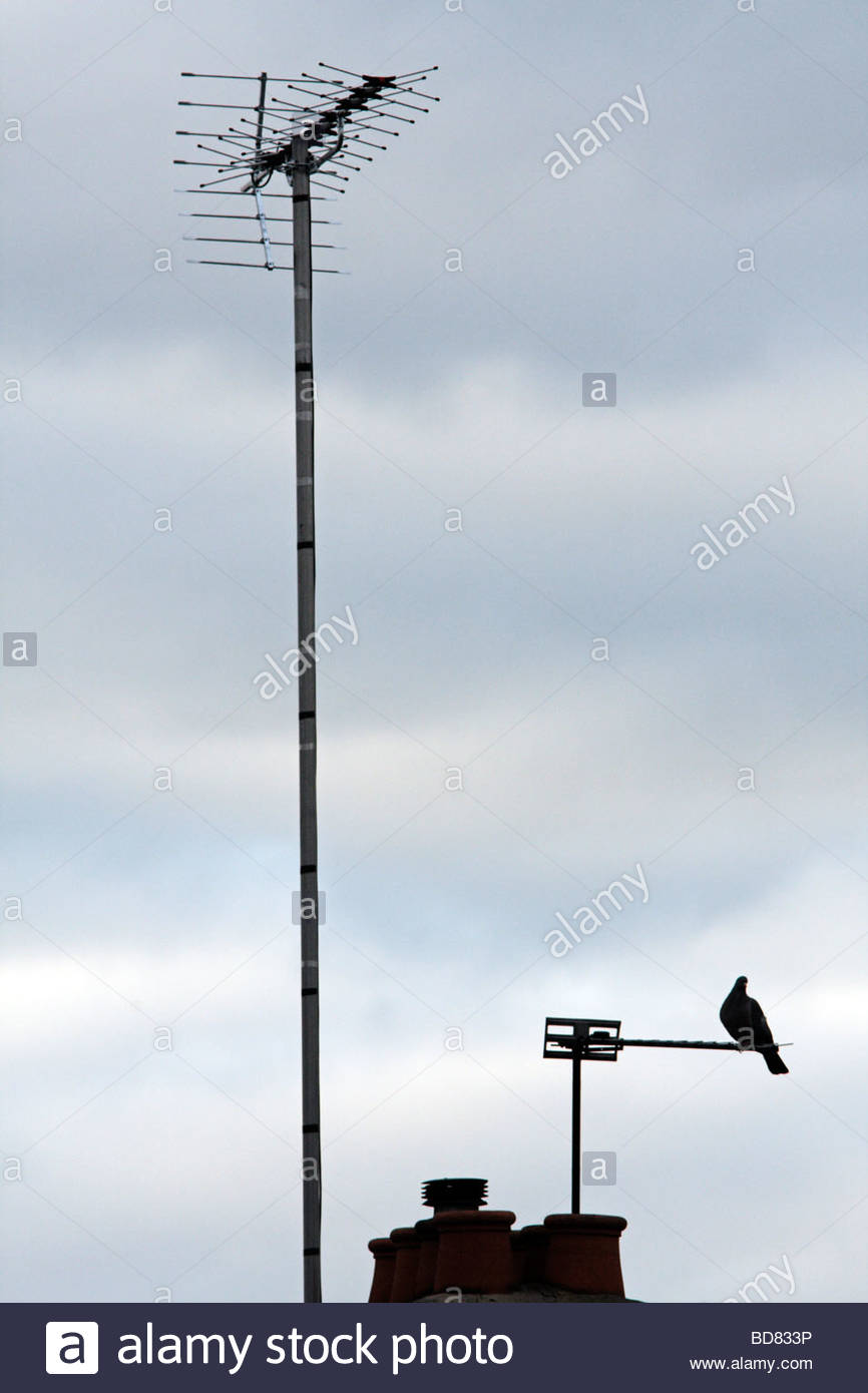 Pigeon and tall TV aerial London - Stock Image