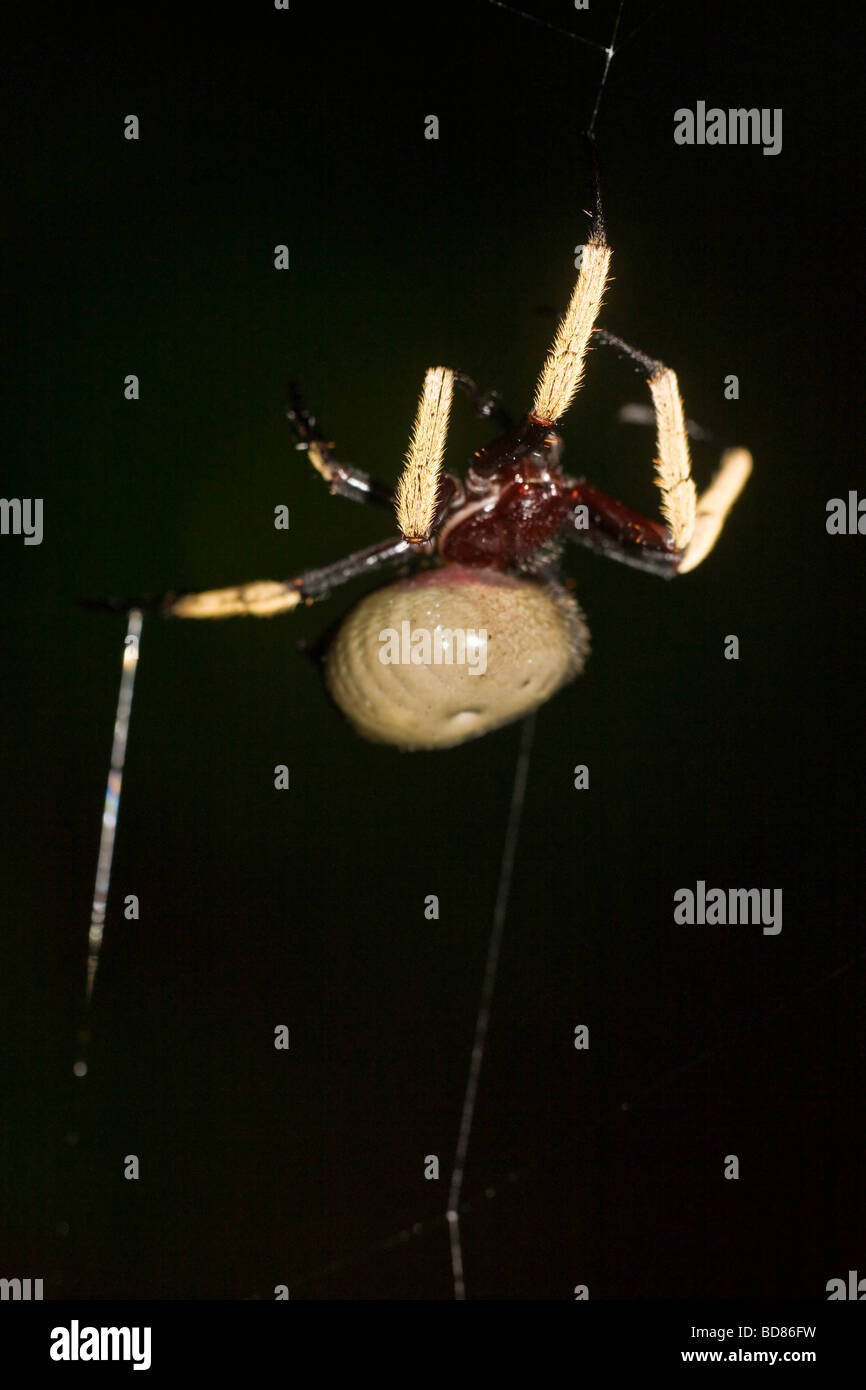 Spider Mount Stock Photos & Spider Mount Stock Images - Alamy | pink monkey in mount orb