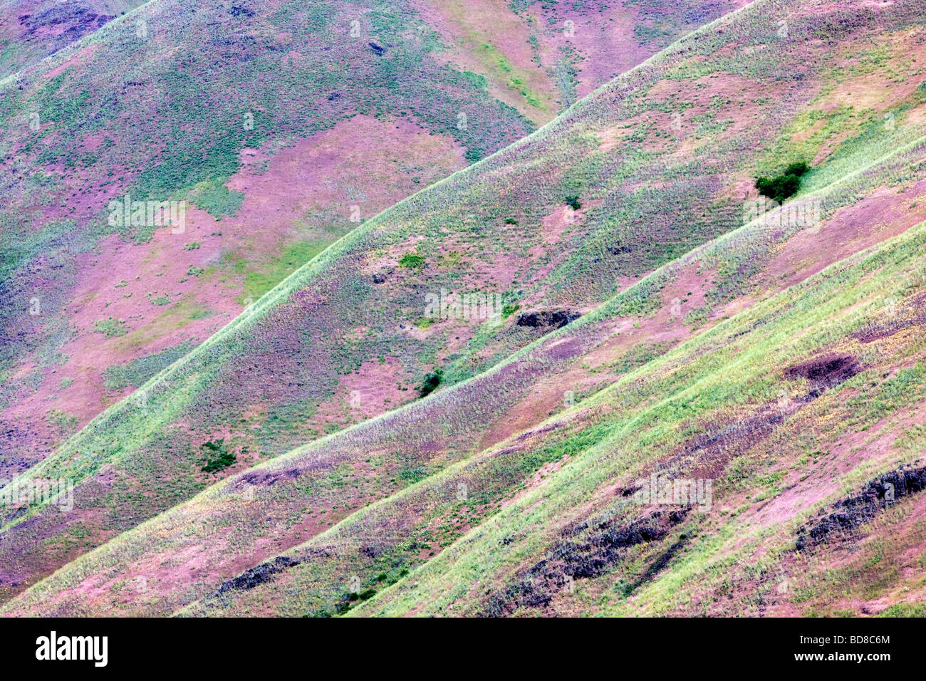 Spring colors in hills in Wallowa County Oregon - Stock Image