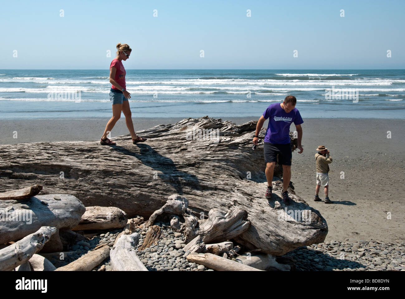a young couple climb across a giant uprooted tree washed ashore on the beach below Kaleloch campground Olympic Peninsula - Stock Image