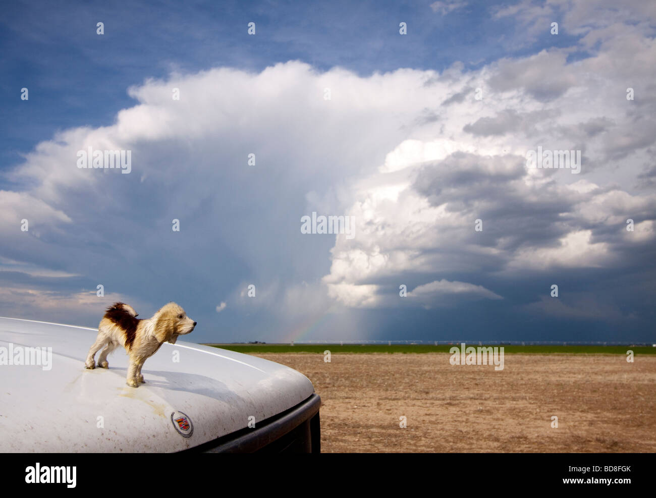The hood ornament of the Doppler on Wheels Rapidscan truck is parked in front of a thunderstorm in the distance - Stock Image