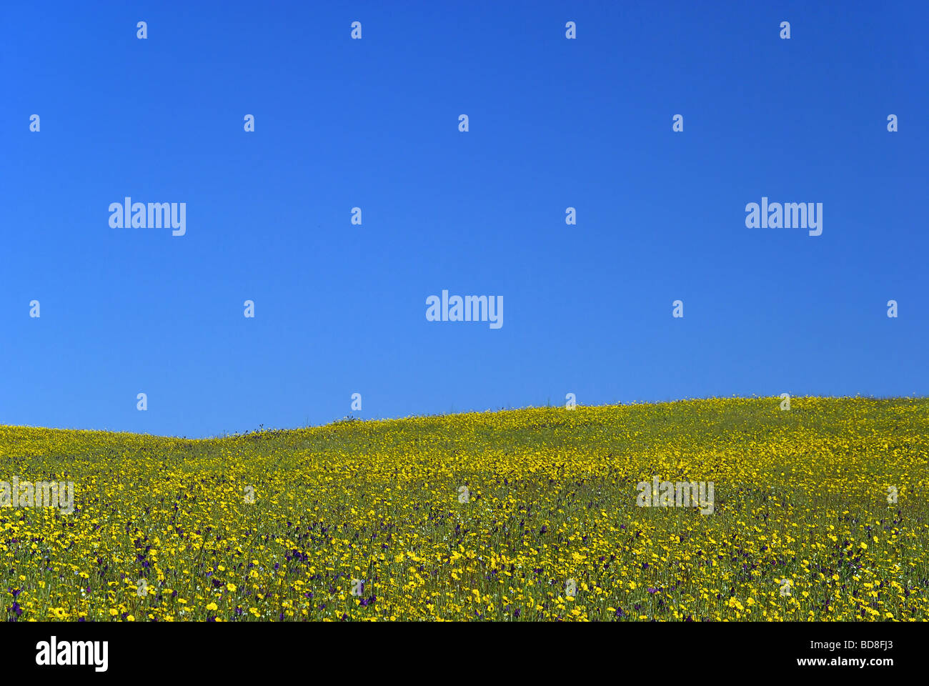 Wiese meadow 21 - Stock Image