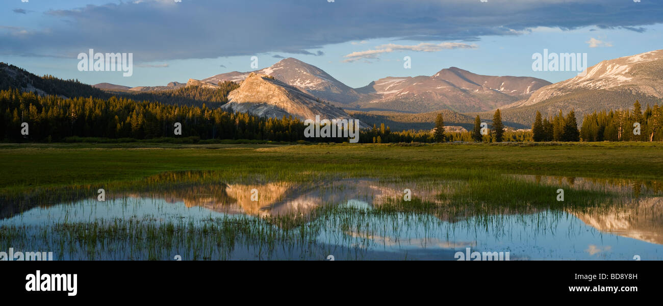 Reflection of Mount Dana in flooded field Tuolumne Meadows Yosemite national park California - Stock Image