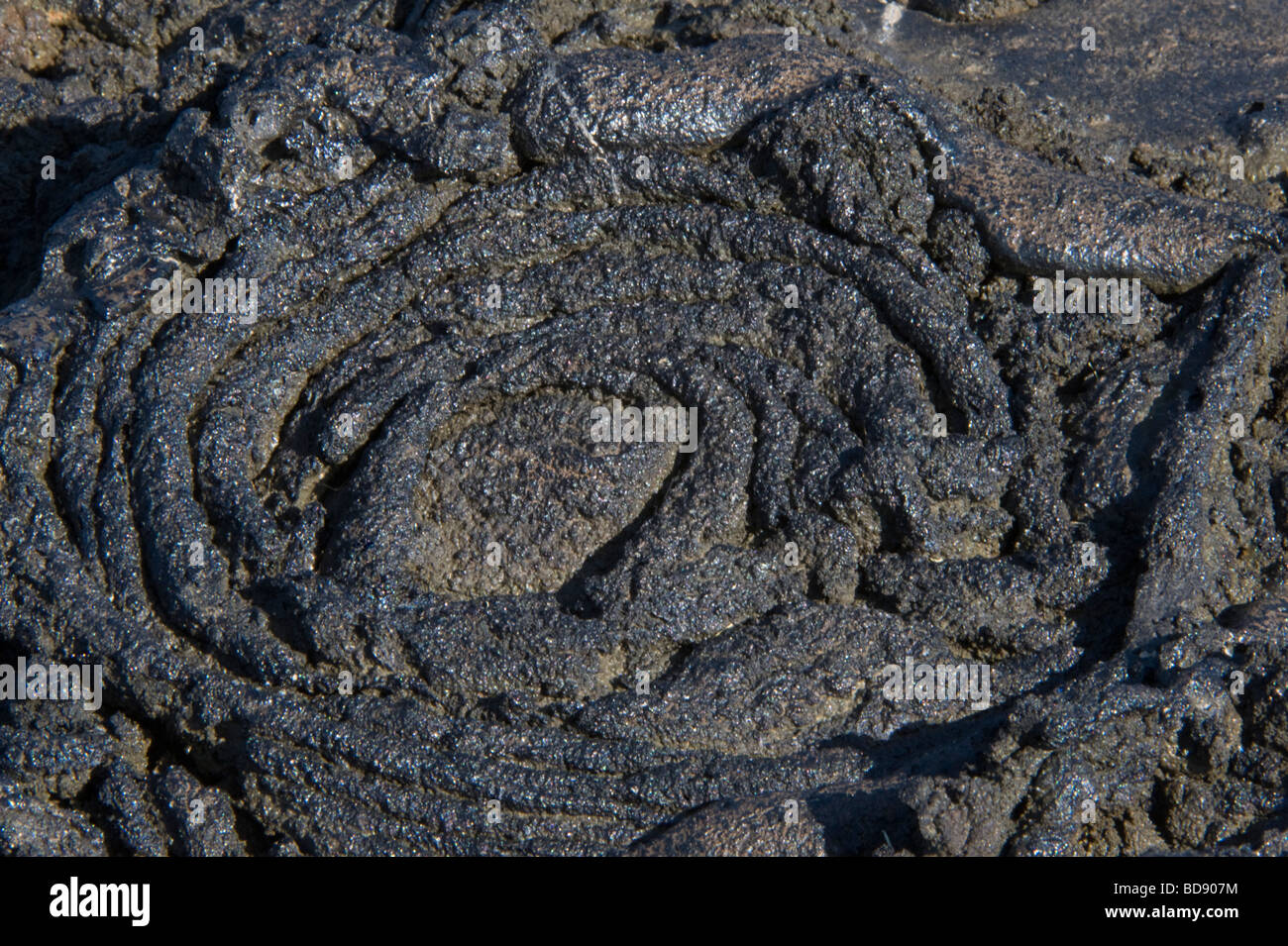 Hot Pahoehoe Lava Creates Ribbon-Like Shapes as it cools Sullivan Bay Santiago Island Galapagos Ecuador Pacific - Stock Image