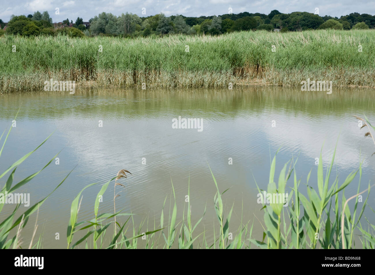 Reed beds and the River Alde, Suffolk, close to The Maltings at Snape. - Stock Image