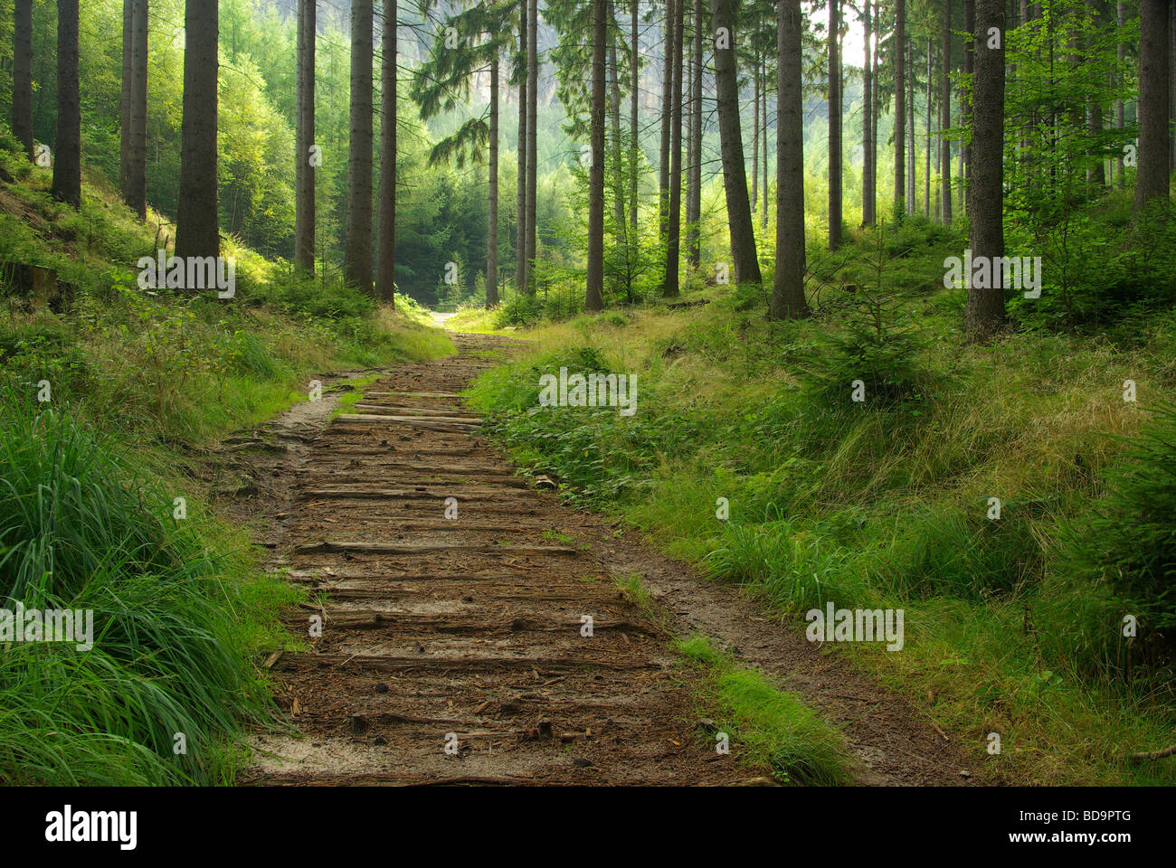 Wald forest 39 Stock Photo