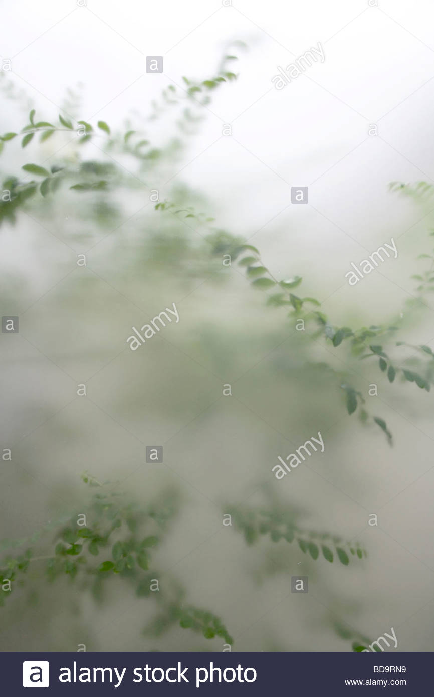 green garden plants seen through frosted glass - Stock Image