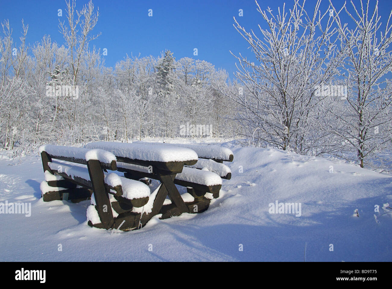 Wald im Winter forest in winter 03 - Stock Image