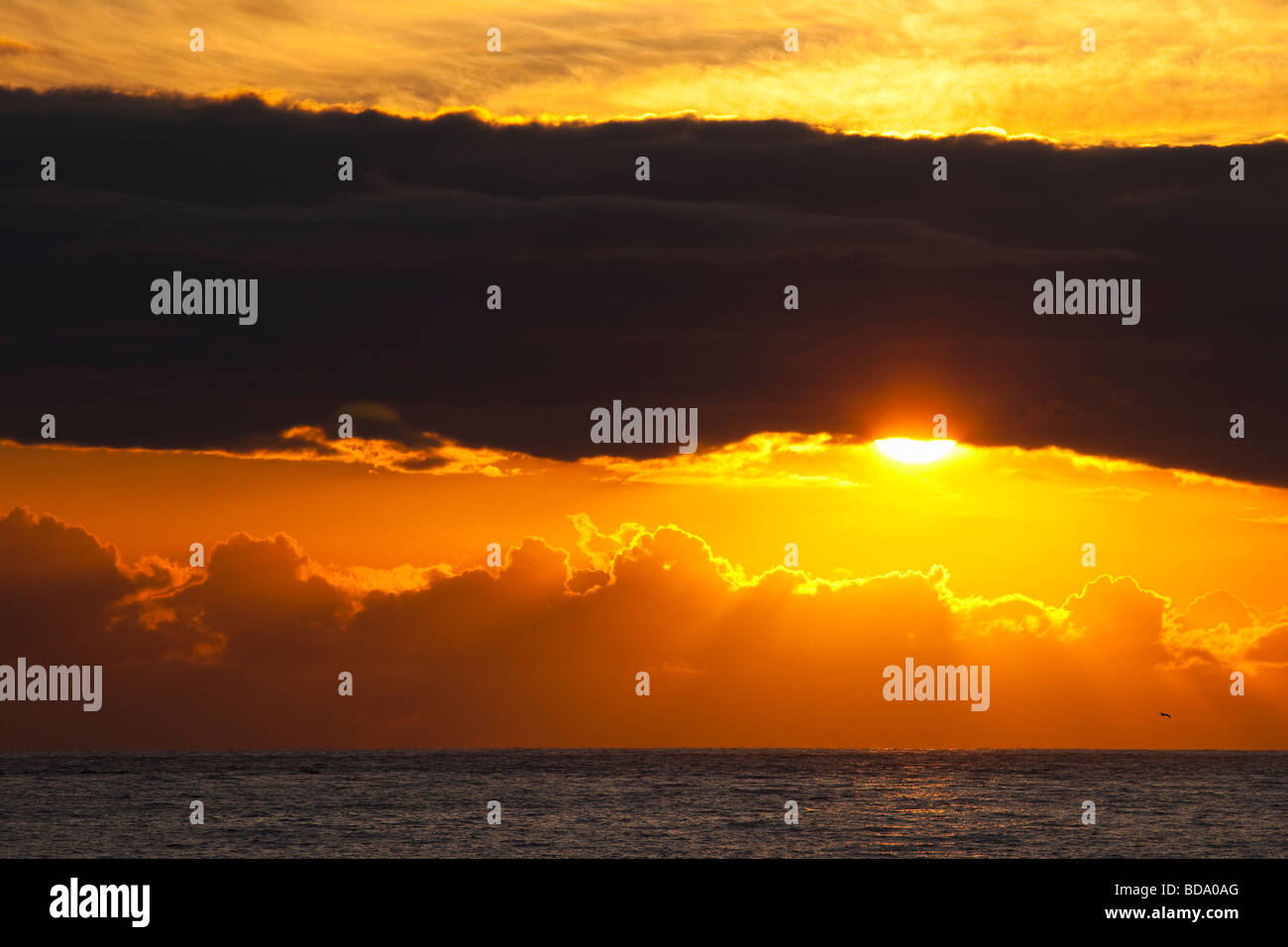 Sunset sun rays behind clouds over sea with seabird in summer Cornwall England UK GB United Kingdom Great Britain - Stock Image