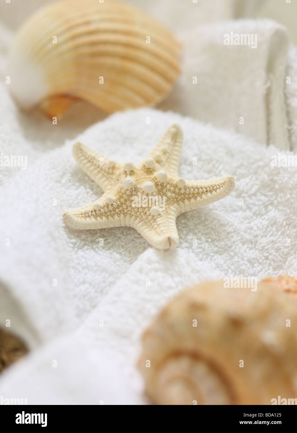 Starfish and shells on washcloths - Stock Image